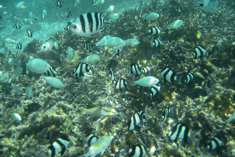schnorcheln auf mauritius